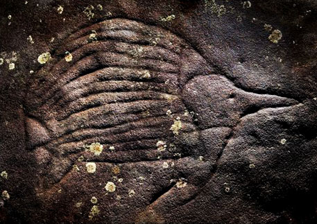 Aboriginal rock carving of an Echidna