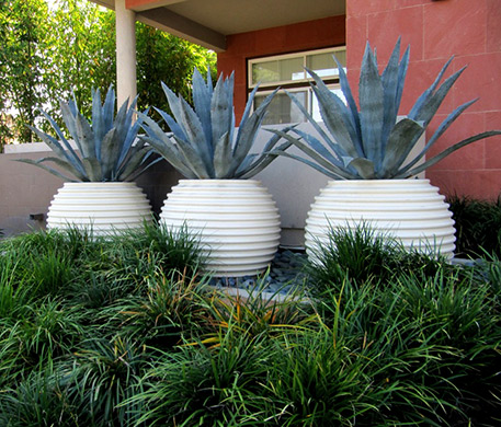Agave-Groove-Pots white ribbed planters with cacti