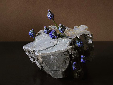 Muscari---grape hyacinth by Atsushi