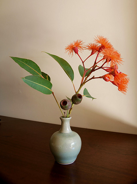 Ikebana Attempt1 flowering gum