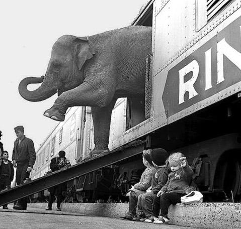 Paul Rice--circus elephant Bronx,-New-York, 1963