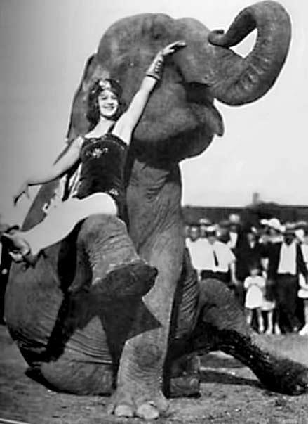 elephantgirl - female circus performer sitting on an elephants knee