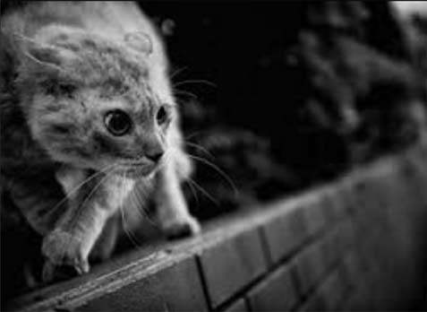 Japanese-Street-Photographer-Tatsuo-Suzuki street cat on prowl