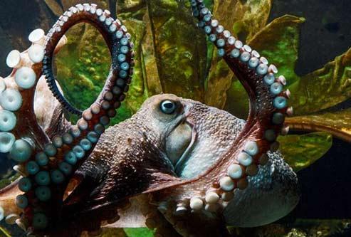octopus-escape-NZ