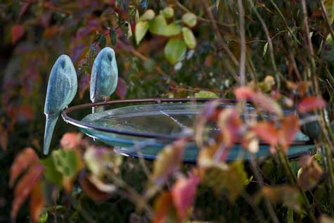 Glass--birdbath-with-two-blue--budgies---Kooper-Tasmania