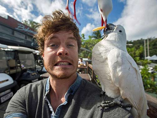 animal-selfie-potato-seagull-and-cocky-sharing-a-chip