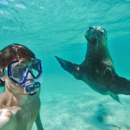 underwater animal-selfie-seal and Alan Dixon