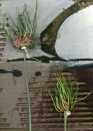 Catherine-White_wild_onion on paper mix media