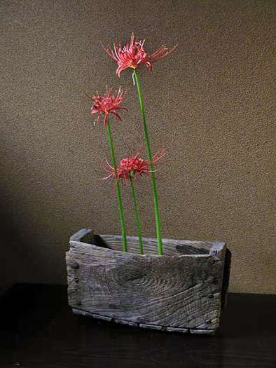 red-spider-lily-iflowers kebana-display