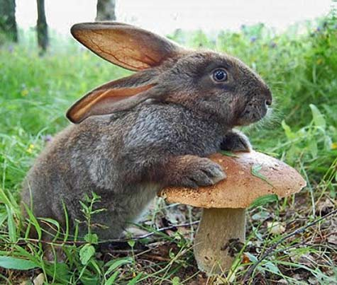 rabbit standing in a field next to a mushroom