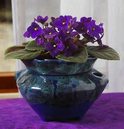 Blue ceramic planter with violets.