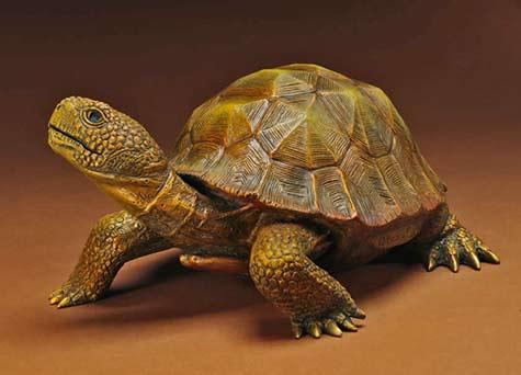 Shellden Beary bronze tortoise