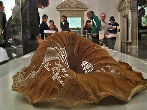 Elisabetta-di-Maggio-Lotus leaf stabilized and hand-cut with a scalpel.Elizabeth MayVenezia Contemporanea