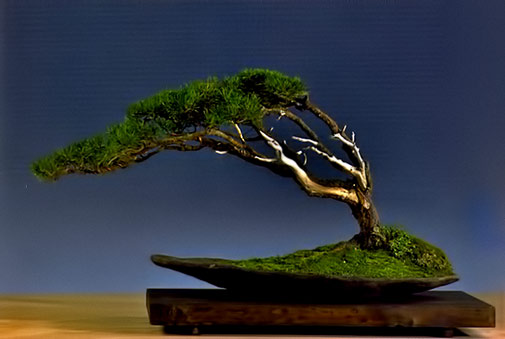 Fukinaga-('From-the-Wind'~ Bonsai ) on wooden base by Vaclav Novak