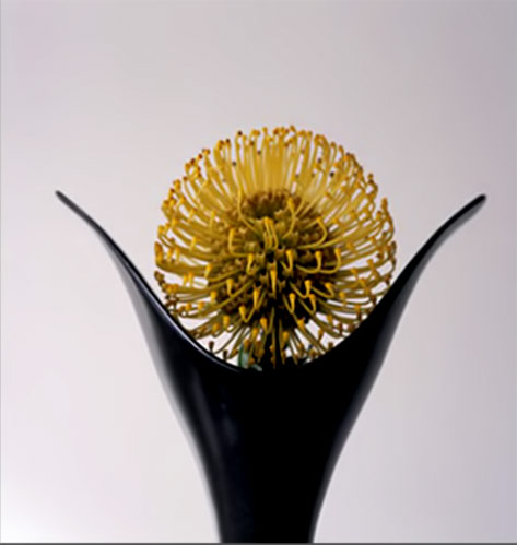 Limited Edition Prints---Vivienne Foley Yellow flower in black vase